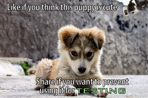 The_Puppy-2Btesting