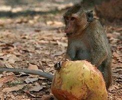 monkey-trap 2